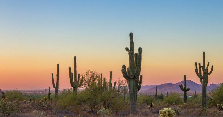 Zomertrend 2018: desert vibes